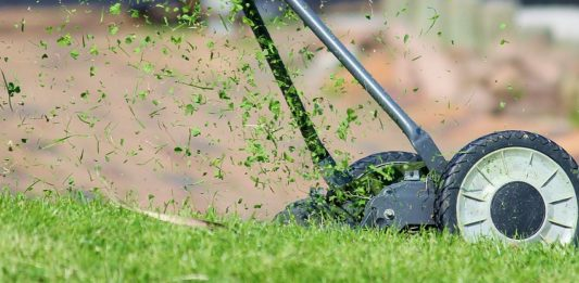 Low Maintenance Easy Garden