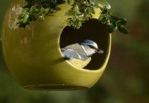 bird in the garden